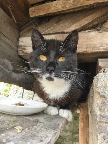 Кошечка, очень красивая, ищет новый дом и любящих хозяев!!!