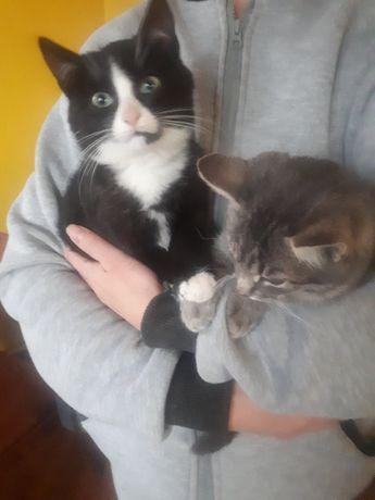 Котики у добрі руки