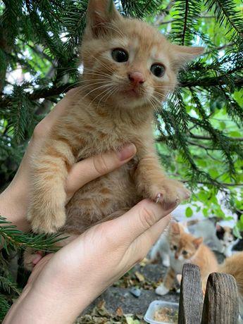 Śliczny rudy kotek szuka domu