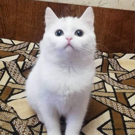 Киця- красуня в пошуках домівки!