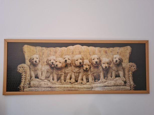 Quadro puzzle cães emoldurado - cão golden retriever