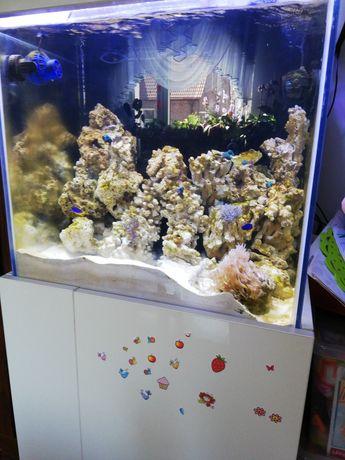 skala do akwarium morskiego