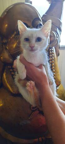 3 gatinhas para adopção responsável