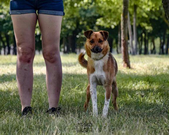 Bimber! Kontaktowy, cudowny psiak szuka domu!