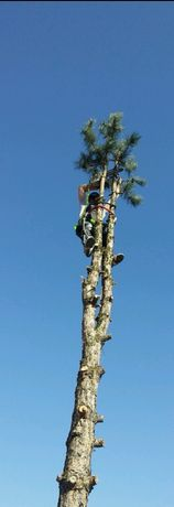 Wycinka drzew przycinka drzew utylizacja gałęzi koszenie traw łąk