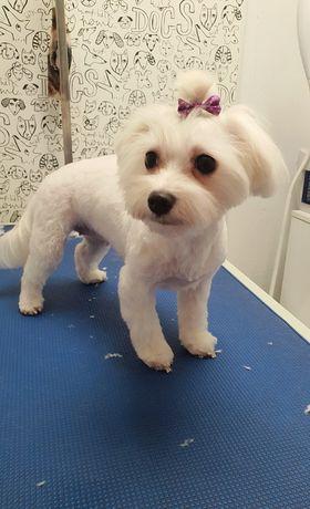 Groomer, psi fryzjer, kompleksowa pielęgnacja, w kwietniu zniżka 50%