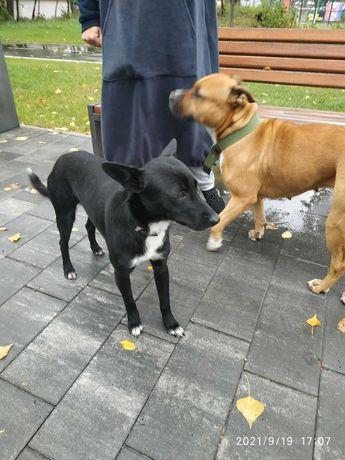 Обнаружен  черный пес - сидит как Хатико в парке и ждет хозяина