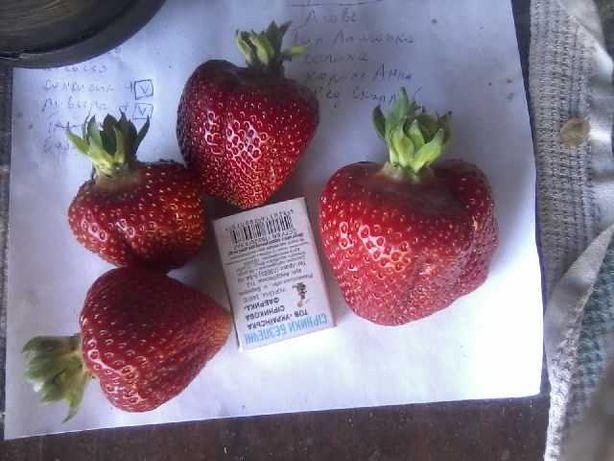 Продам Свежую ягоду смородина (черная.белая.красная,крыжовник,голубика