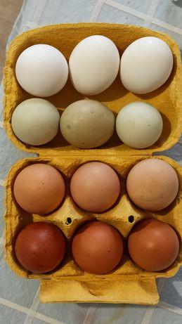 Ovos caseiros biológicos