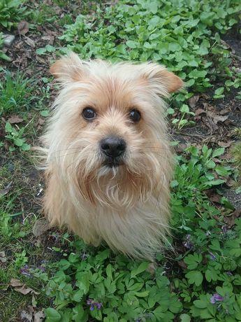 Пропала собака, Киев, 07.05.21