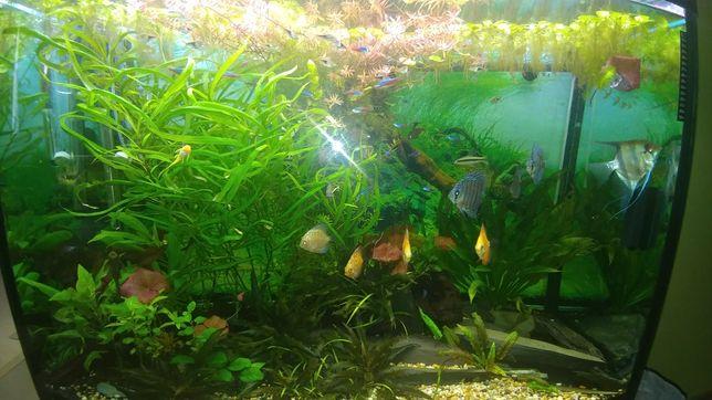 Rosliny akwariowe nadwyzka