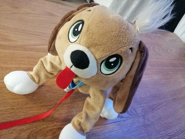Pies Boogie Epee Psi rozrabiaka