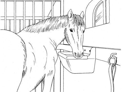 Karmidło Poidło dla koni krów Koryto 15l Żłób