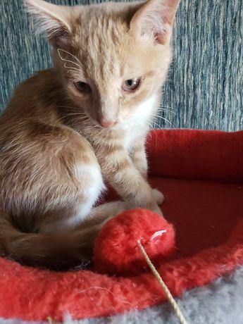Рокси,2,5 месяца, обработана от паразитов,ходит в лоточек,ласковая