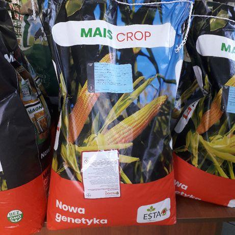 Kukurydza, kwalifikowany materiał siewny