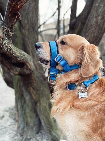 Халти ( недоуздок ) для собаки