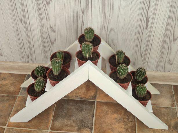 Набор кактусов (10шт) , кактусы, домашние растения , суккуленты, ЛОФТ