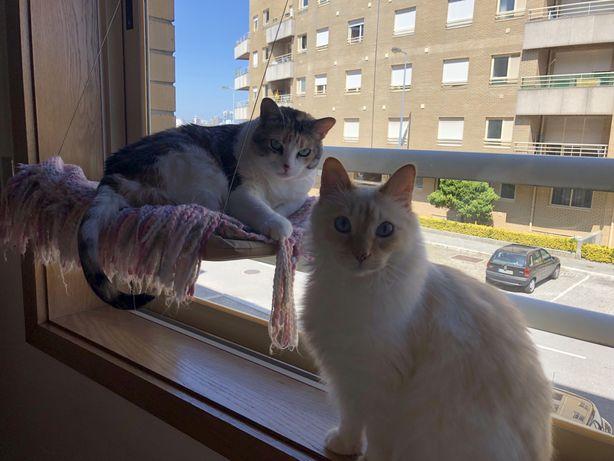 Gato - cama de janela