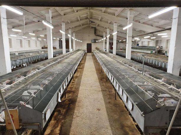 Продається Ферма корівники телятники