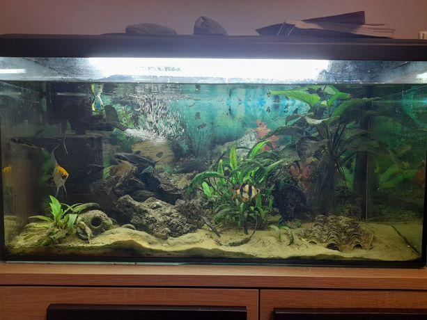 Akwarium 112L filtr, oświetlenie, rybki