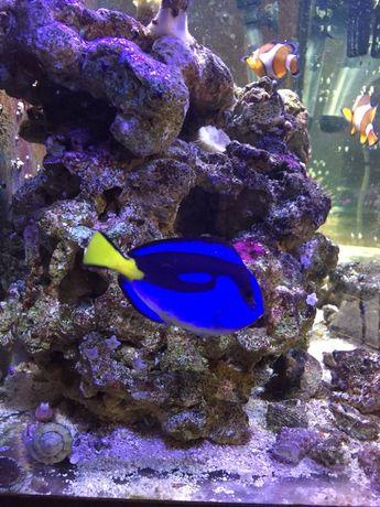Żywa skała akwarium morskie ponad 15kg na stanie