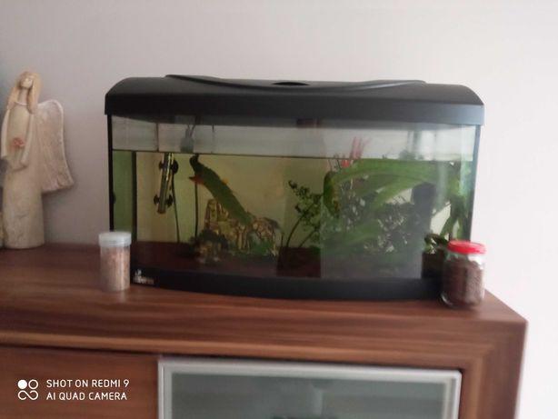 Sprzedam akwarium panoramiczne diversa