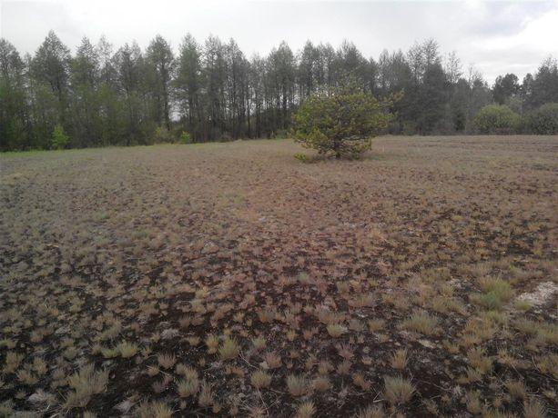 6 Гектаров земли ОСГ