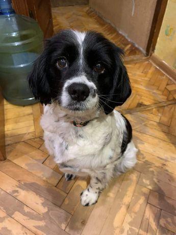 Фіфа шукає дім, невеличка собака