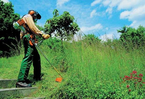 limpezas de terrenos e árvores e podas, corte de árvores e manutenção