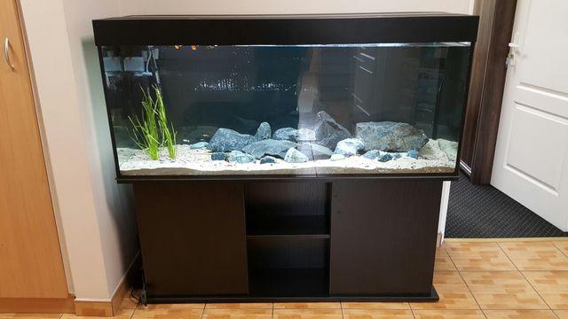 Sprzedam zestawy akwarystyczne. Pomoc w doborze ryb i sprzętu.