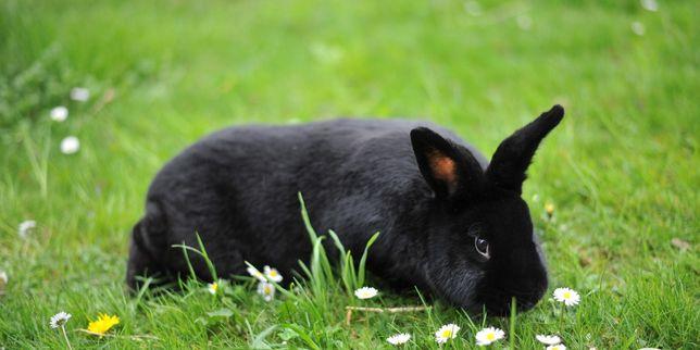 Króliki króliki króliki.