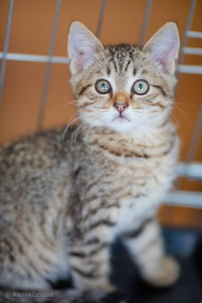 Рокки - игривый котенок в добрые руки