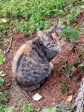 Młode śliczne koty szukają domu, rude koty