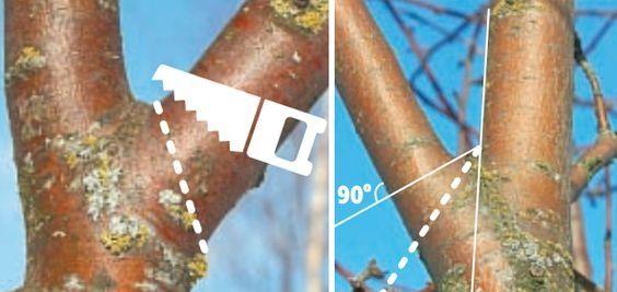 Качественная обрезка и удаление деревьев в Киеве, выезд бесплатный!