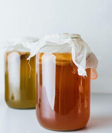 Kombucza - starter, grzyb herbaciany