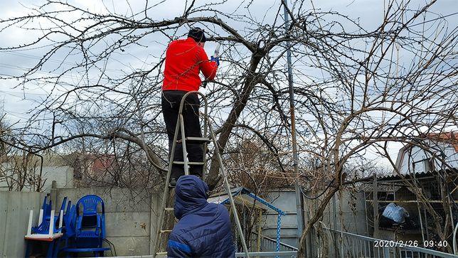 ОБРЕЗАНИЕ деревьев ОСЕНЬЮ, обрезка деревьев, формирование кроны дерева