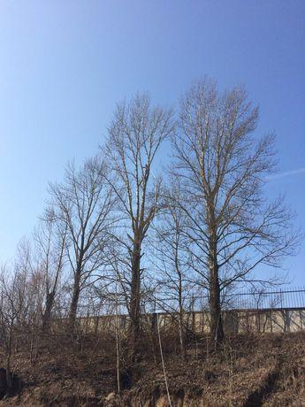 Обрізування гіляк (спилювання дерев)