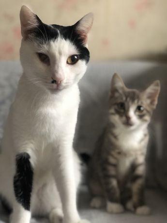 Кот подросток ищет семью