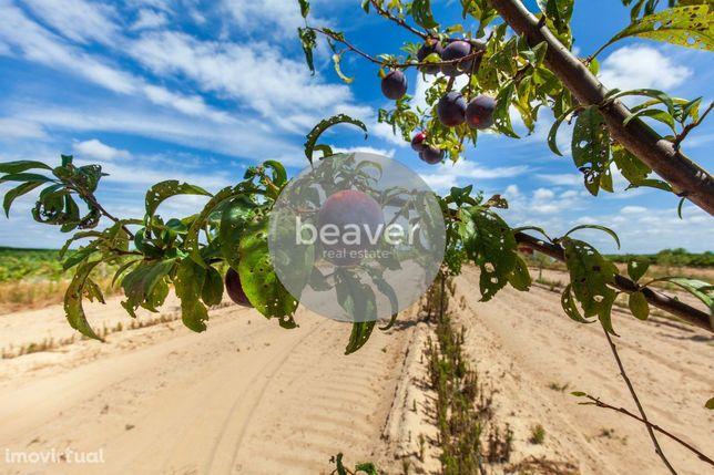 Quintinha + Terreno + Olival + Árvores de Fruto + Equipamento, Almeiri