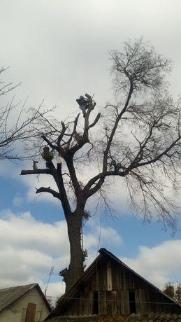 Спил аварійних дерев зрізання