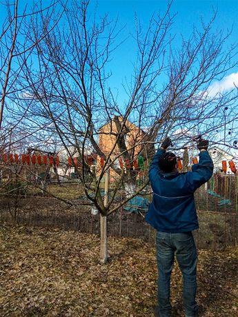 ОБРЕЗКА сада ВЕСНОЙ, Обрезка садовых деревьев, САДОВНИК уход за садом