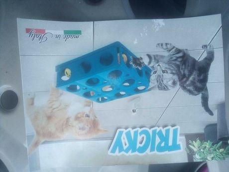 Zabawka dla kota gonitwa