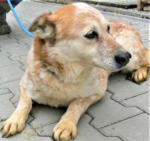 KUNDEL - 459aaa - pies, który nie zasłużył nawet na określenie płci
