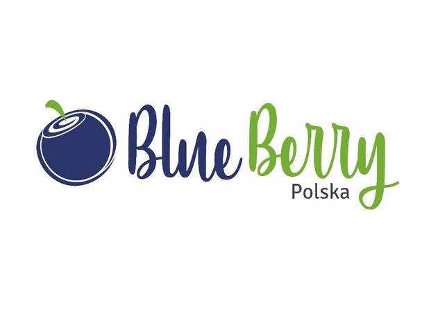 PROMOCJA Borówka Amerykańska 4 i 5 letnie sadzonki certyfikat CAC