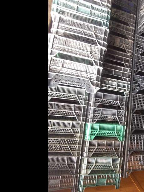 Skrzynki skrzyneczki plastikowe 5 kg różne