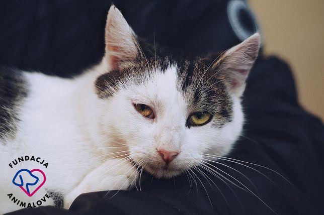 Młody biało-bury kotek szuka domu