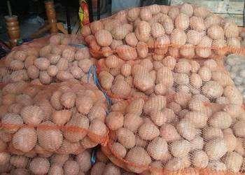 Ziemniaki jadalne DOWÓZ