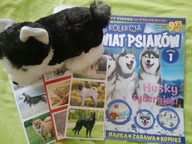 Świat Psiaków kolekcja Husky syberyjski