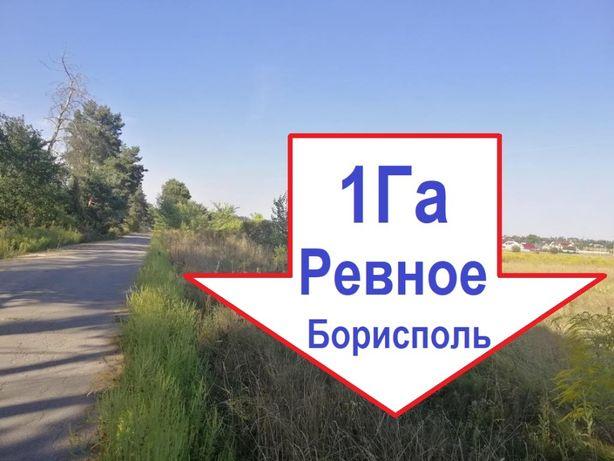Продам 1 Га под жилое строительство в Бориспольском районе. Ревное