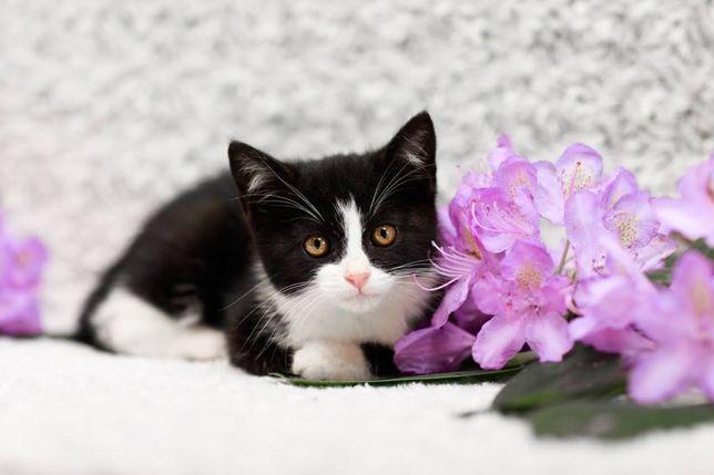 Ksenia - 2-miesięczna, nieco nieśmiała kotka